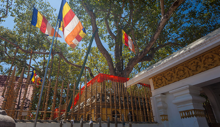 Sri Maha Bodhi the oldest planted tree