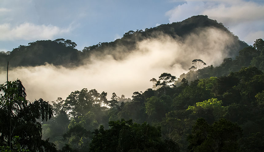 Sinharaja-rain-forest-nature-reserve,-Sri-Lanka