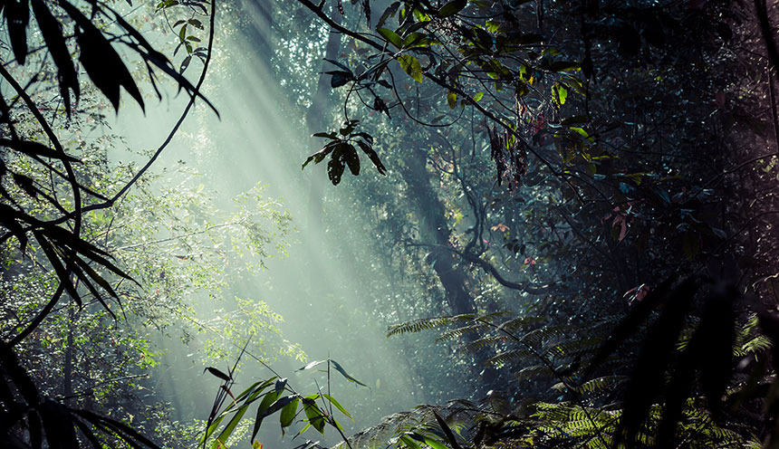 Sunlight rays pour through leaves in a rainforest at Sinharaja