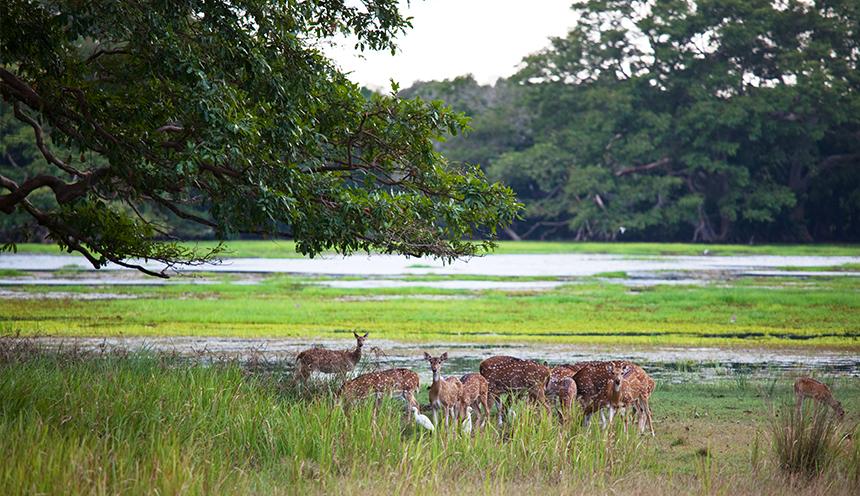 lunugamvehera _national_park_sri_lanka