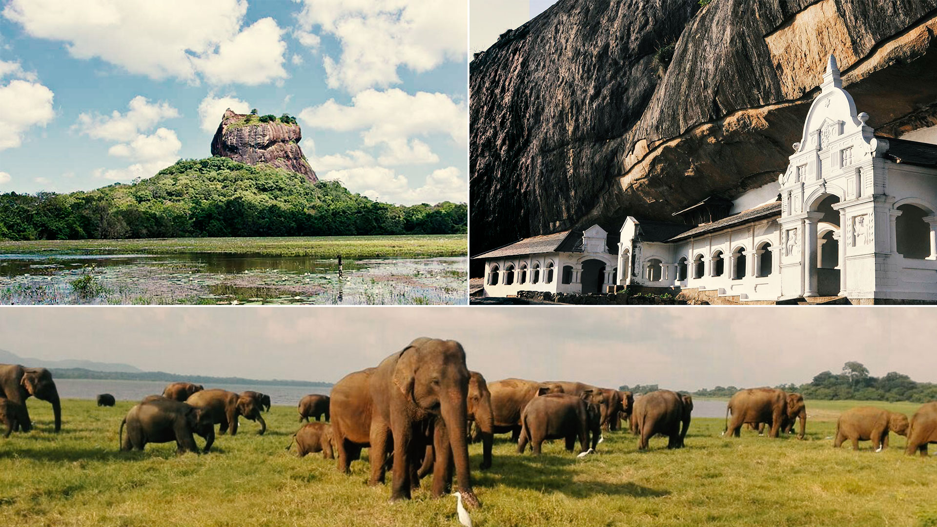 Day Tour Sigiriya Dambulla and Minneriya National Park