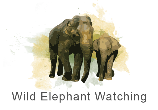 Wild Elephant Watching